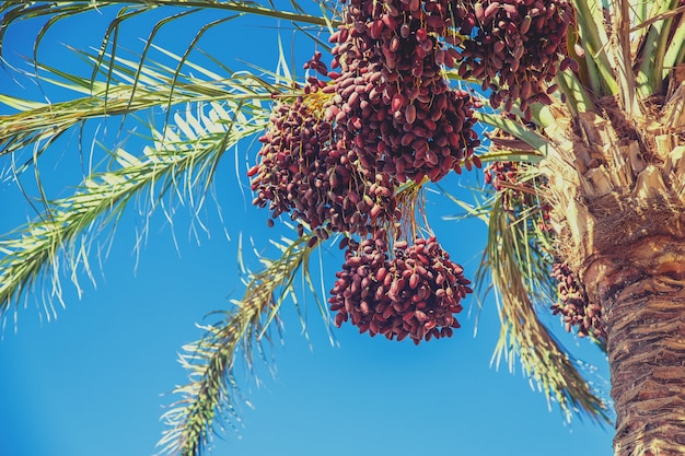 Date palm trees against the sky