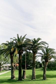 푸른 하늘에 대 한 녹색 잔디밭에 대추