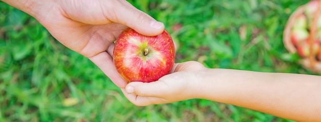 娘と父親は庭でリンゴを集めます。セレクティブフォーカス。