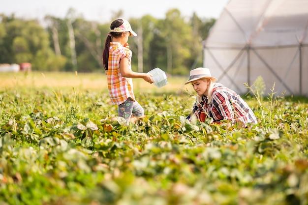 Дочь и мама работают в огороде, собирают клубнику