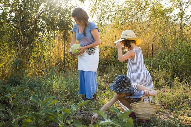 Daughter and mother harvesting vegetables in the field