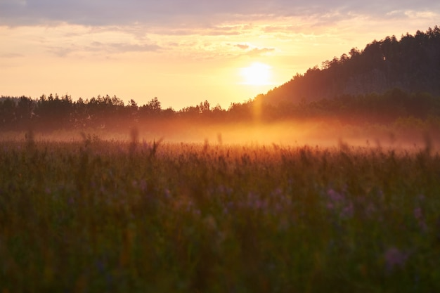Dawn in the field early in the morning. soft sunlight. wild flowers bloom in summer, the field is overgrown with grass. rural area