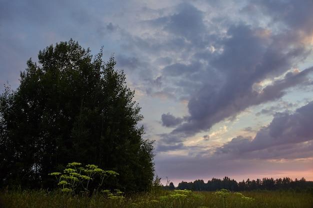 早朝に野原で夜明け。やわらかな日差し。夏には野の花が咲き、畑は草が生い茂ります。農村地域