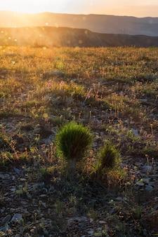 Рассвет в горах. на молодые ели падают лучи рассвета. вертикальный вид.