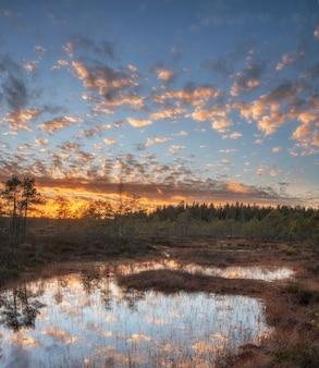 Рассвет на северном болоте летом
