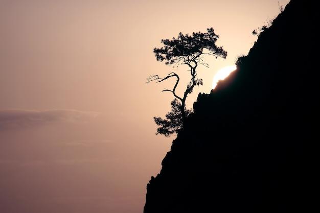 소나무 성장 배경 바위에 새벽