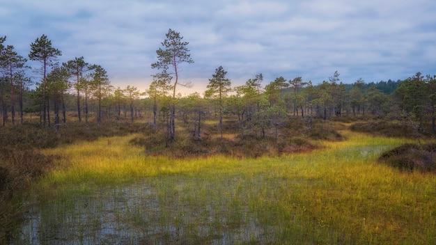 Рассвет на болоте, осеннее утро
