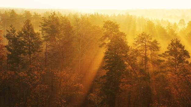 Рассвет над красивым лесом с высокими деревьями