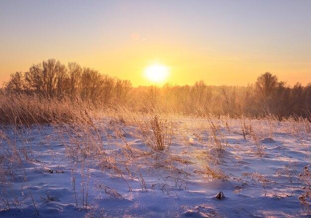 冬の野原の夜明け。青い雪の中の乾いた草や木々、昇る太陽の光