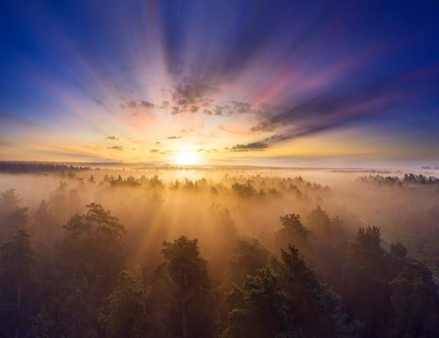 Рассвет над лесом. прекрасный летний утренний пейзаж.