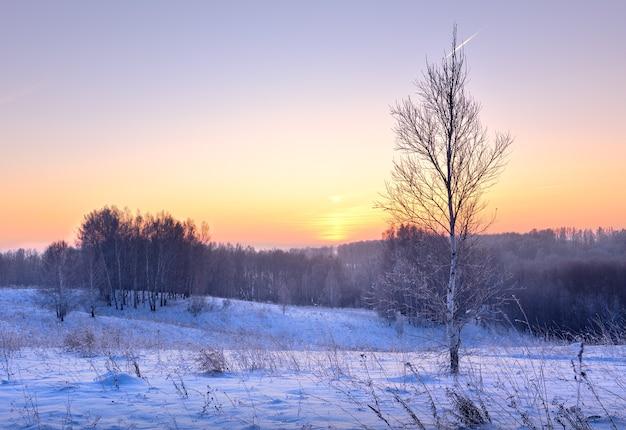 Рассвет над зимним лесом небольшая березка среди сугробов синих снежных деревьев вдалеке