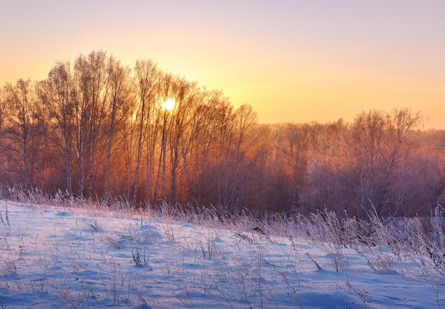 冬の森の夜明け木の枝から太陽が輝いています