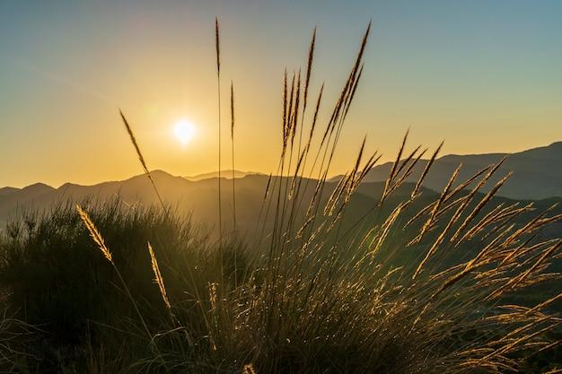 草の後ろの山の夜明け。