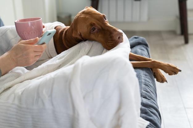 家で一人で女性がスマートフォンで夫からのテキストメッセージを読む犬と一緒にソファでお茶を飲む