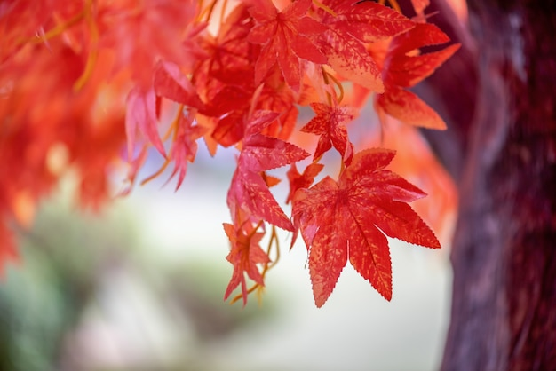 Day maple leaves background