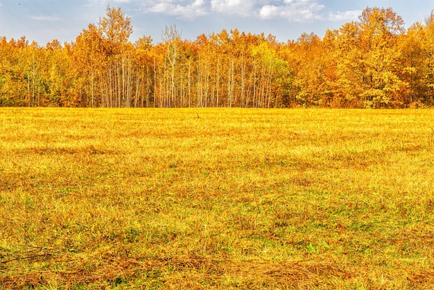 Daytime autumn landscape of the forest edge