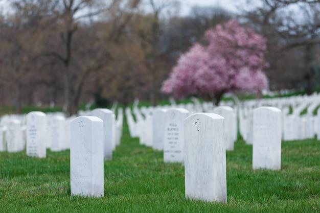 美しい桜と墓石、アーリントン国立墓地、ワシントンdc、米国