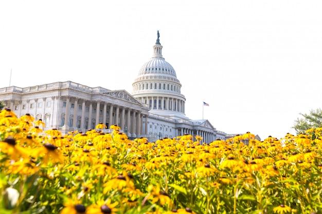 議会議事堂ワシントンdcデイジーの花アメリカ