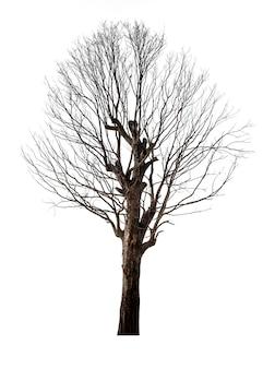 Мертвое и сухое дерево, изолированные на белом фоне