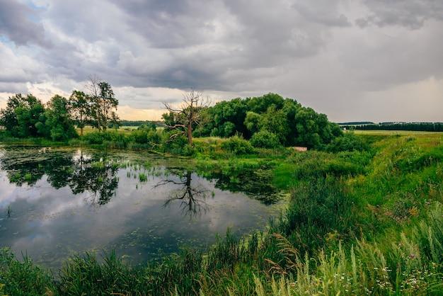どんよりした日の池の岸の枯れ木と乾いた木。水面での反射。