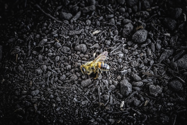 Dead bee dropped to the ground after pesticide use