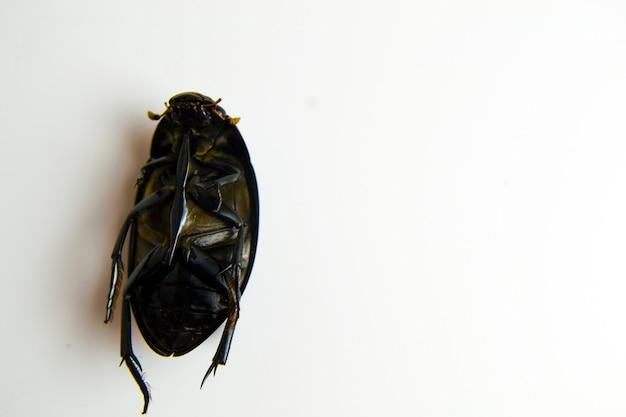 Мертвый жук крупным планом на белом фоне для вашей рекламы средства защиты от тараканов ...