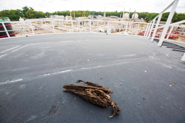 원유로 오염 된 상단 지붕 판 탱크 wather에 죽은 새