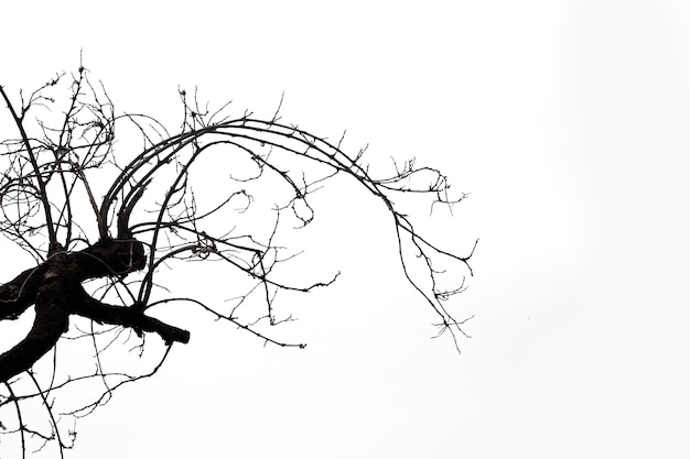 Dead branches, silhouette dead tree or dry tree on white with clipping path.