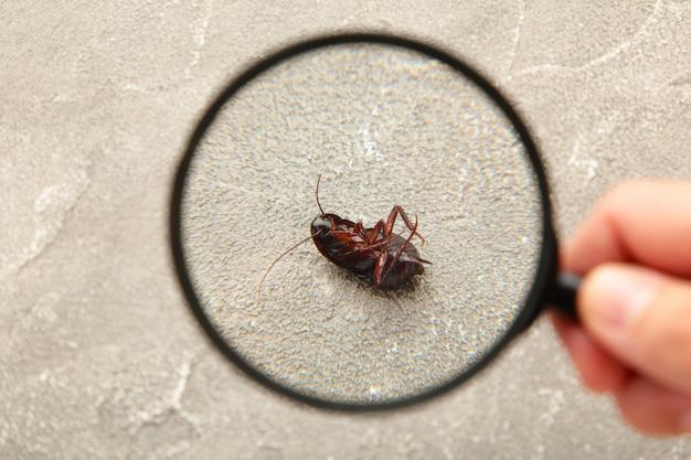 Мертвый таракан на полу с увеличительным стеклом