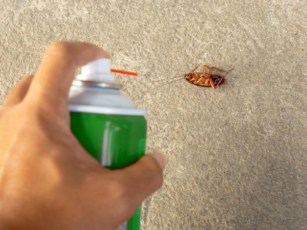 바닥에 죽은 바퀴벌레