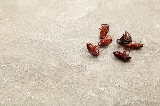 Dead cockroaches on grey floor