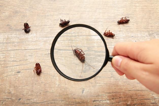 Мертвые тараканы на полу с увеличительным стеклом