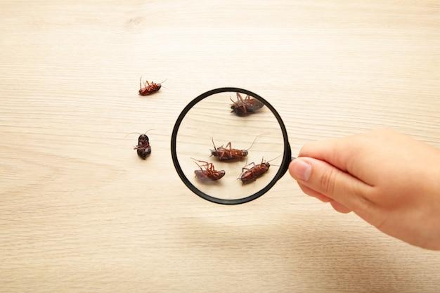 돋보기로 확대 바닥에 죽은 바퀴벌레