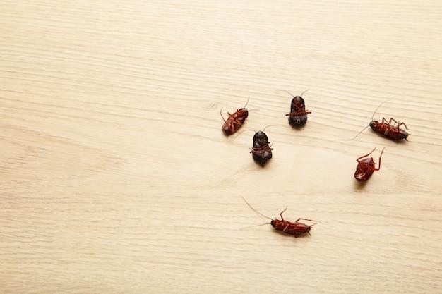 나무 바닥에 죽은 바퀴벌레