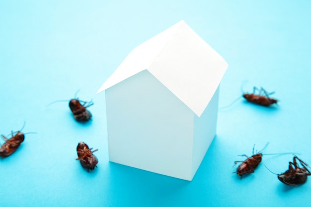 Dead cockroaches and paper house on blue