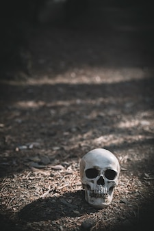 Dead cranium placed on grey soil in daytime