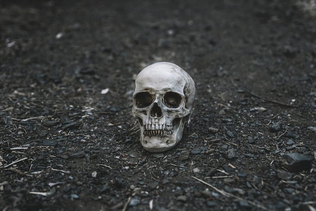 Dead cranium placed on grey soil