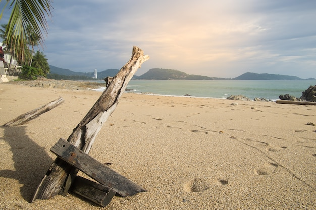 Dead dry trunk branch tree with shadow on sand beach