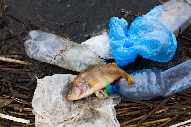 Мертвая рыба с пластиковым мусором на берегу океана. концепция защиты морской флоры и фауны.