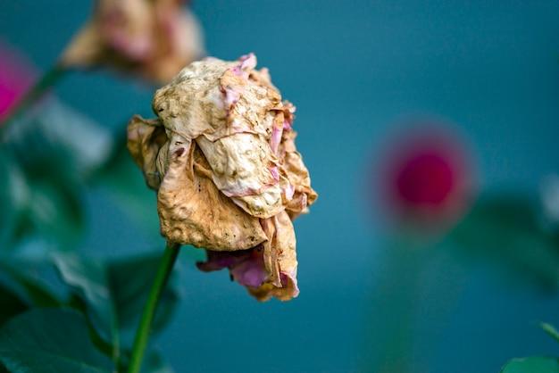 Dead flower in nature