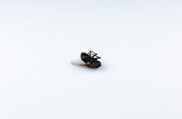 흰색 바탕에 죽은 파리. 사진을 닫습니다. 집에 있는 곤충으로부터 보호.