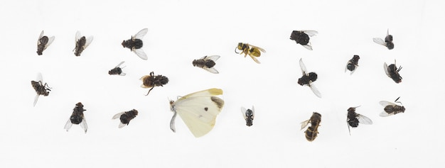 Dead insects isolated on white background