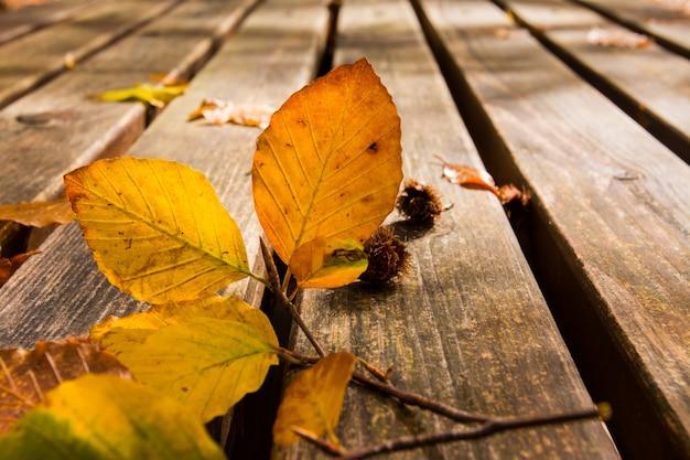 Мертвые листья на скамейке. осень и осень фон. листва в национальном парке монти симбруини, лацио, италия.