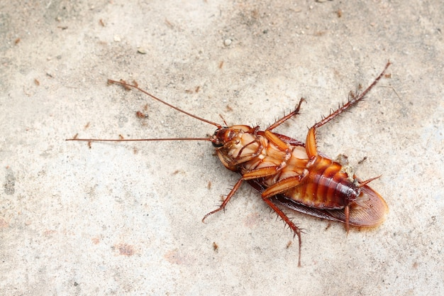 Мертвый таракан.