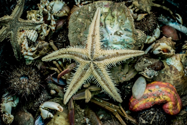 바다에서 잡은 후 죽은 바다 동물