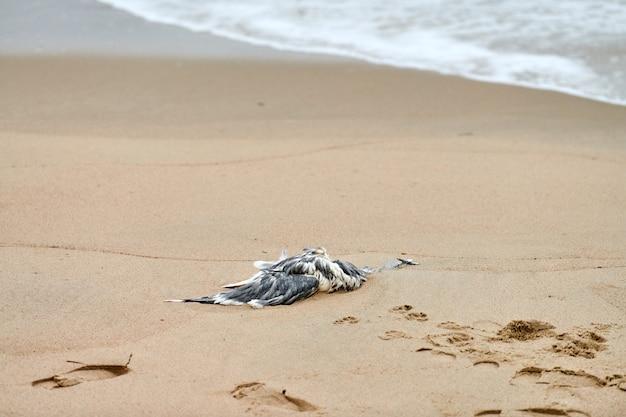 汚染された砂浜で死んだ海鳥