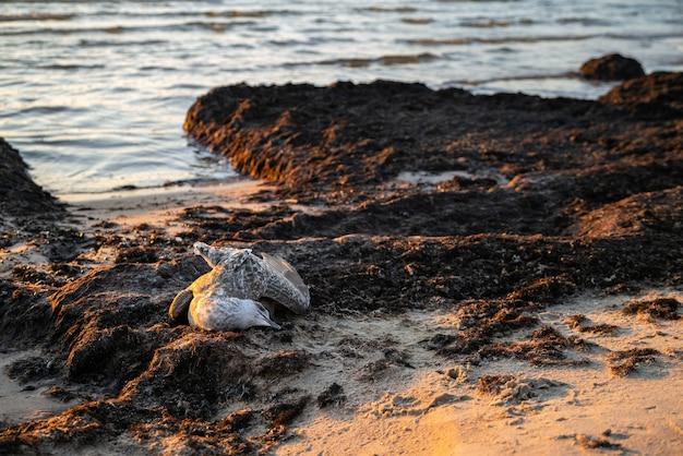 Дохлая чайка выброшена на берег моря на закате