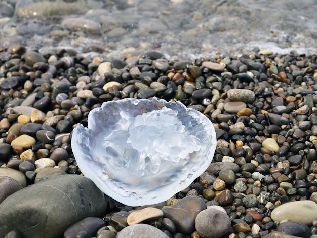 Мертвые полупрозрачные медузы на галечном берегу моря