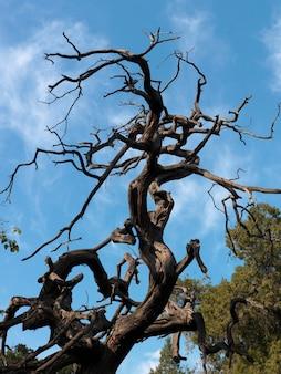 Мертвое дерево в имперском саду, запретный город, пекин, китай