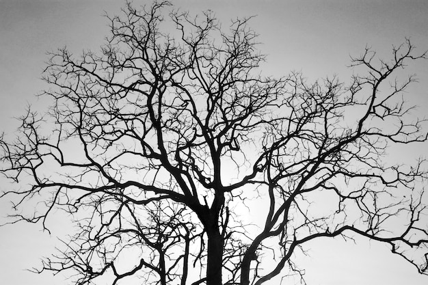 Dead tree branch, black and white.